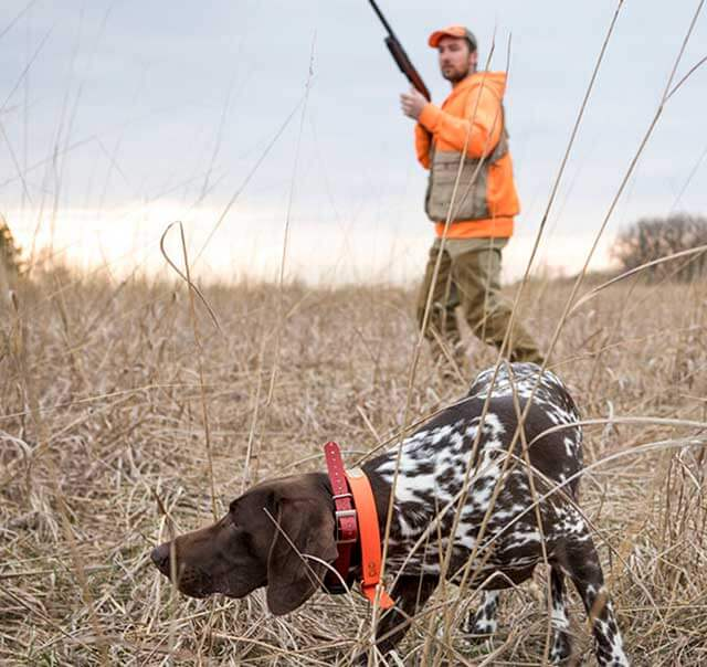 Pointing Dog Training with Gun Dog Success